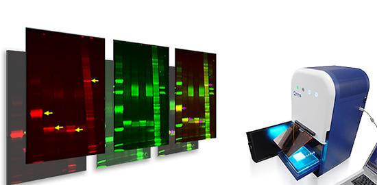 Fluorescentiebeeldvorming van DNA / eiwit