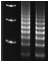 DNA gel_small
