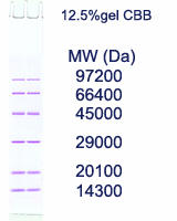 AE-1440 EzStandard SDS-PAGE molecular weight marker sample