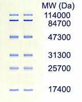AE-1450 EzStandard PrestainBlue SDS-PAGE/Sample data of prestained protein marker for western blotting
