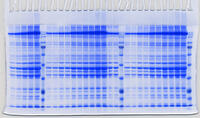 30 samples result pattern